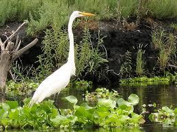 imagen de aves.jpg